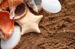 Starfish und Seashells auf goldenem Sand lizenzfreie stockfotos