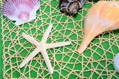 Starfish und Shells Stockfotografie