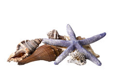 Starfish und Shells Stockfotos