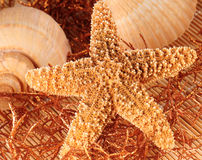Starfish und Shells Stockbild
