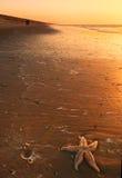Starfish und Sonnenuntergang lizenzfreie stockbilder