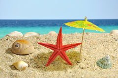 Starfish under sun umbrela shadow Stock Photos