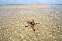 Starfish under the water Royalty Free Stock Image