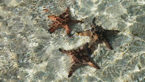 Starfish under water on sand. stock footage