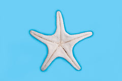 Starfish underside Stock Photos