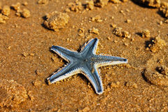 Starfish. Underwater inhabitant, on the ocean Stock Photos