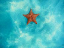Starfish underwater over white sand in Caribbean sea royalty free stock photos