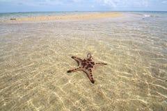 Starfish unter dem Wasser Lizenzfreies Stockbild