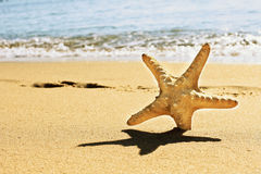 Starfish on vacation Stock Photo