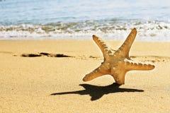 Starfish on vacation Stock Photo