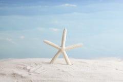 Starfish, vacation background Stock Photography