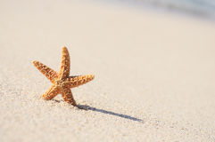 Starfish in vacations Stock Images