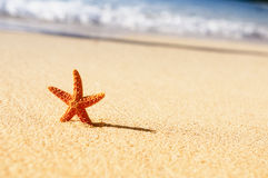 Starfish in vacations Stock Photography