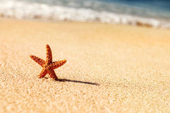 Starfish in vacations Royalty Free Stock Photography