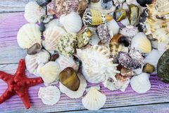 Starfish, various shells lie on the wooden background. Starfish red, colored stones, a collection of seashells close-up stock photography