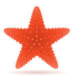 Starfish vector illustration Stock Photos