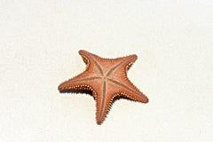 Starfish Venezuela. The beautiful starfish in islands of Los Roques in Venezuela stock image