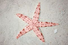 Starfish vermelhos na praia tropical foto de stock royalty free