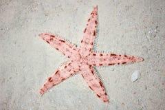 Starfish vermelhos na praia tropical Foto de Stock Royalty Free