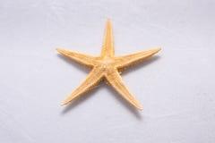 Starfish vor weißem Hintergrund Lizenzfreie Stockbilder