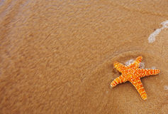 starfish washed out of the ocean Stock Photos
