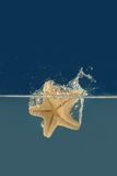 Starfish in a water. Starfish falling into a water Stock Images