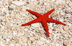 Starfish in the water Royalty Free Stock Photography