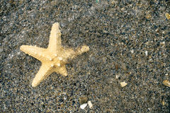 Starfish in the water at the beach Stock Image
