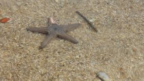 Starfish on The water stock footage