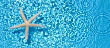Starfish in water Stock Photo