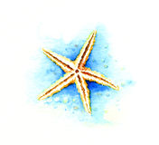 Starfish. Watercolor illustration on white Stock Photo