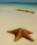 Starfish with wave. Starfish on a white sandy beach with the blue caribbean sea in the background. Photo taken in Nassau Bahamas Stock Image