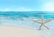 Starfish and wave Royalty Free Stock Photo