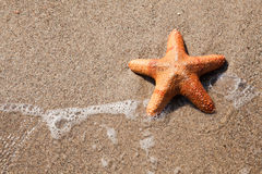 Starfish and wave on beach Stock Photo