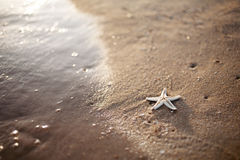 Starfish and a wave. Relaxing picture of wave and starfish Royalty Free Stock Images