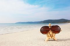 Starfish wearing glasses on beach Royalty Free Stock Images