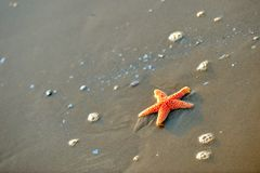 Starfish on wet sand Royalty Free Stock Photo