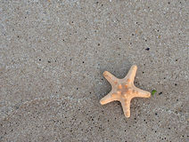 Starfish on wet sand Stock Photos