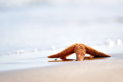 Starfish on wet sand Royalty Free Stock Photography