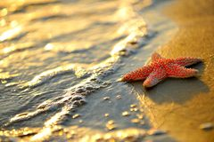 Starfish on wet sand Stock Image