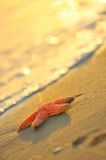 Starfish on wet sand Royalty Free Stock Image