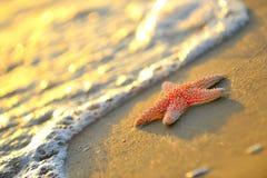 Starfish on wet sand Royalty Free Stock Photos