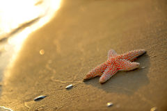 Starfish on wet sand Stock Photography