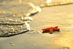 Starfish on wet sand at sunrise/sunset Stock Photo
