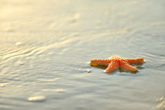 Starfish on wet sand at sunrise/sunset Royalty Free Stock Images