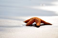 Starfish on wet sand at sunrise/sunset Royalty Free Stock Photography