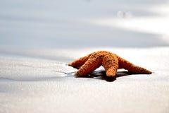 Starfish on wet sand at sunrise/sunset Royalty Free Stock Photography