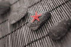 Starfish on the wet stone Stock Images