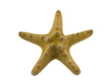 Starfish on white Royalty Free Stock Image