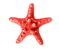 Starfish on white background Stock Photo